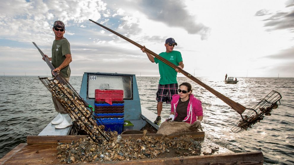 Florida might shut down bay known nationally for its oysters